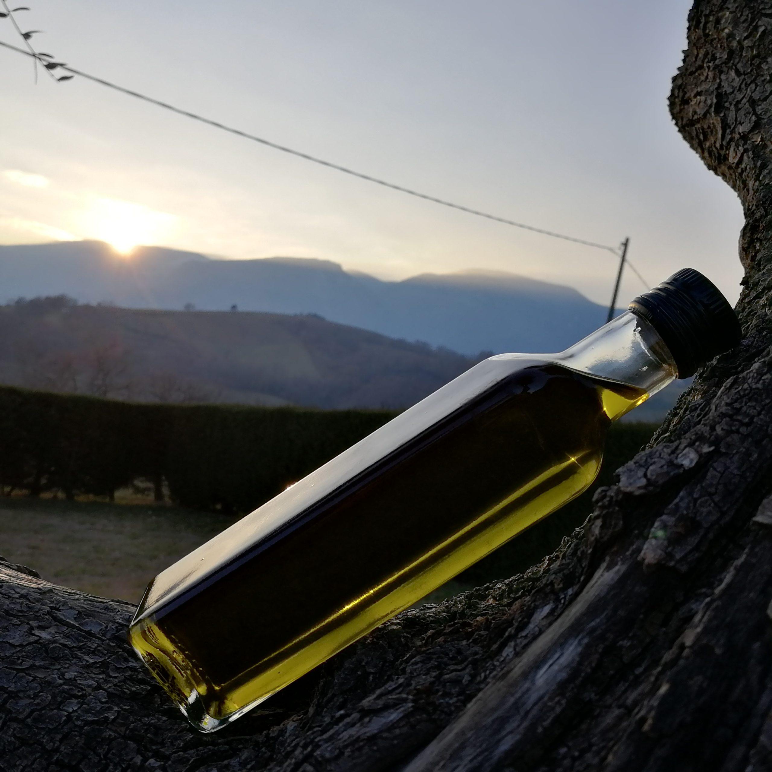 Quando acquistare l'olio extravergine di oliva?